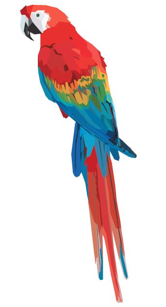 Un perroquet selon Nicholas Huggins